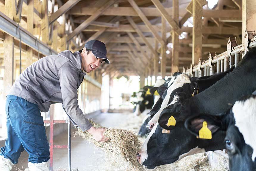 愛知県半田市・知多牛の平和牧場