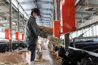 知多牛を愛知・知多半島の豊かな自然の中で丹精こめてじっくり育てる